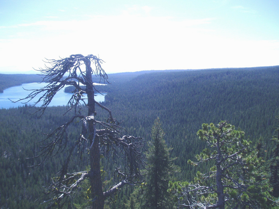 A broken tree is in the foreground, and far off a blue lake can be seen among the endless expanse of trees.